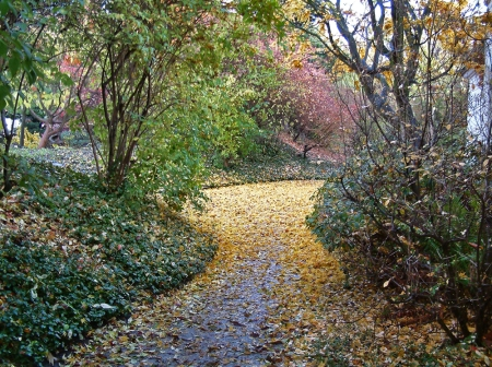 Pathway in Fall2