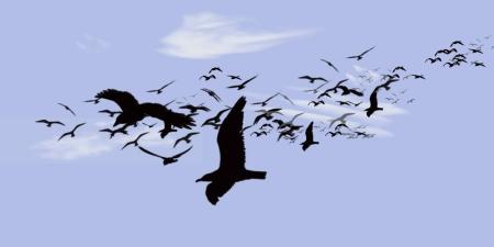 Flocks 1 copy