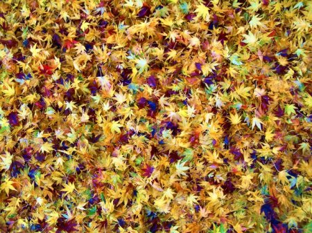 mosaic of leaves