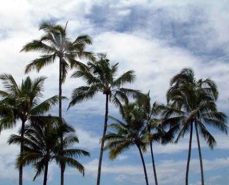 palms_small