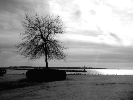 tree at garry point small