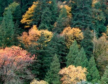 Harrison_trees_fall_1