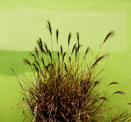 Greenspace 3