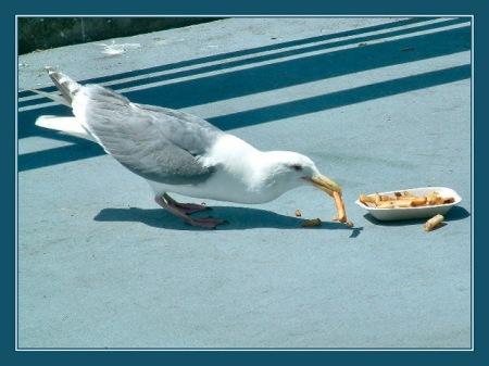 birds breakfast II