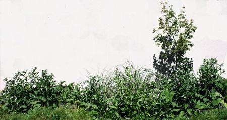 Greenspace #5_small