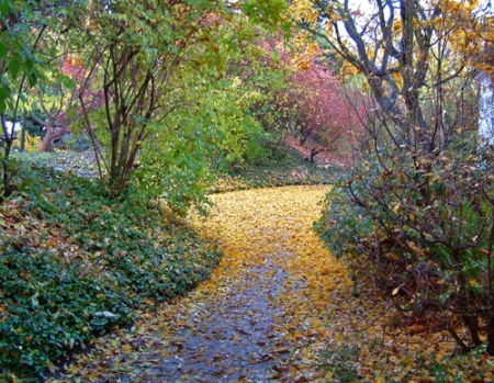 pathway-in-fall_small