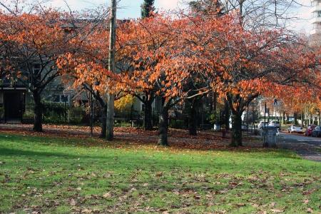 salsbury-park-nov-8